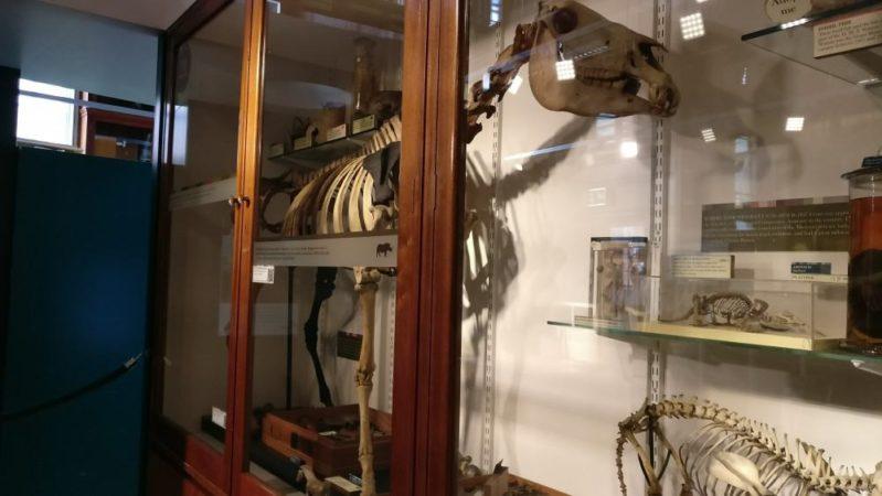 動物の骨と標本だらけの博物館@ロンドン:グラント・ミュージアム