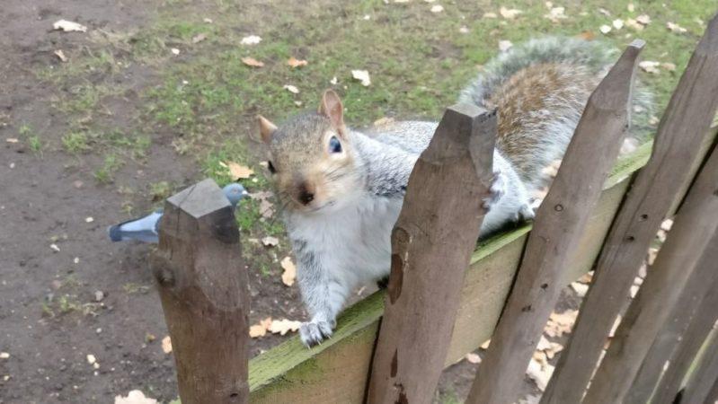 【画像大量】イギリスで今まで見かけた動物を一挙公開する