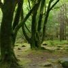 「もののけ姫の森」をアイルランドで発見した