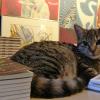 アムステルダムの猫の美術館:余った時間でサクッと見られて猫好きにおすすめ
