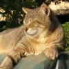 マルタ島は猫島だった!島中を巡って撮ったネコ写真集