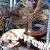生物系・解剖系・標本系博物館まとめ@ロンドン